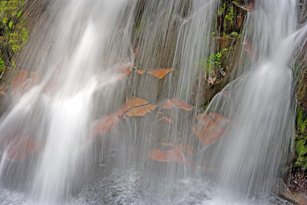 small waterfall Paradise rRver Mt Rainier