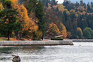 The Stanley Park Seawall and Fall Foliage in Vancouver, British Columbia, Canada