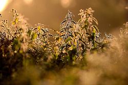 UK ENGLAND WILTSHIRE 26JUN08 - Morning light on nettles and foliage near the river Kennet in Stichcoombe in rural Wiltshire, western England...jre/Photo by Jiri Rezac / WWF UK..© Jiri Rezac 2008..Contact: +44 (0) 7050 110 417.Mobile:  +44 (0) 7801 337 683.Office:  +44 (0) 20 8968 9635..Email:   jiri@jirirezac.com.Web:     www.jirirezac.com..© All images Jiri Rezac 2008 - All rights reserved.