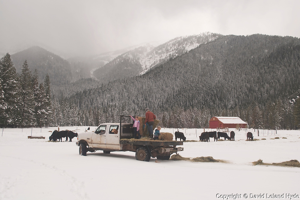 Ranch Manager on Feed Truck, Wagyu Cattle, Grizzly Peak, Palmaz Hangar, Stormy Sky, Winter, Genesee Valley Ranch, Mountain Scenes, Ford Flatbed Truck, California Mountains, Sierra Nevada Mountains