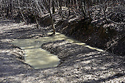 a wild boar mud pool