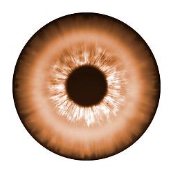 brown eye iris eye iris eye iris