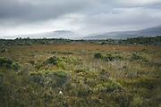Flats covered with bush (shrubland) by Freshwater River, The Southern Circuit, Stewart Island / Rakiura, New Zealand Ⓒ Davis Ulands | davisulands.com