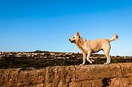 17-10-2015 -  Foto: Hond geniet van uitzicht op Agrigento. Genomen tijdens een persreis rond de Rocco Forte Invitational in Agrigento, Italië.