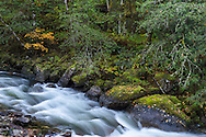 Fall foliage and boulders along Silverhope Creek just outside of Silver Lake Provincial Park near Hope, British Columbia, Canada