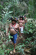Chief Almir Narayamogo in the Surui territory, primary rainforest interior. Surui territory primary rainforest interior.<br /> <br /> An Amazonian tribal chief Almir Narayamogo, leader of 1350 Surui Indians in Rondônia, near Cacaol, Brazil, with a $100,000 bounty on his head, is fighting for the survival of his people and their forest, and using the world's modern hi-tech tools; computers, smartphones, Google Earth and digital forestry surveillance. So far their fight has been very effective, leading to a most promising and novel result. In 2013, Almir Narayamogo, led his people to be the first and unique indigenous tribe in the world to manage their own REDD+ carbon project and sell carbon credits to the industrial world. By marketing the CO2 capacity of 250 000 hectares of their virgin forest, the forty year old Surui, has ensured the preservation, as well as a future of his community. <br /> <br /> In 2009, the four clans and 25 Surui villages voted in favour of a total moratorium on logging and the carbon credits project. <br /> <br /> They still face deforestation problems, such as illegal logging, and gold mining which causes pollution of their river systems