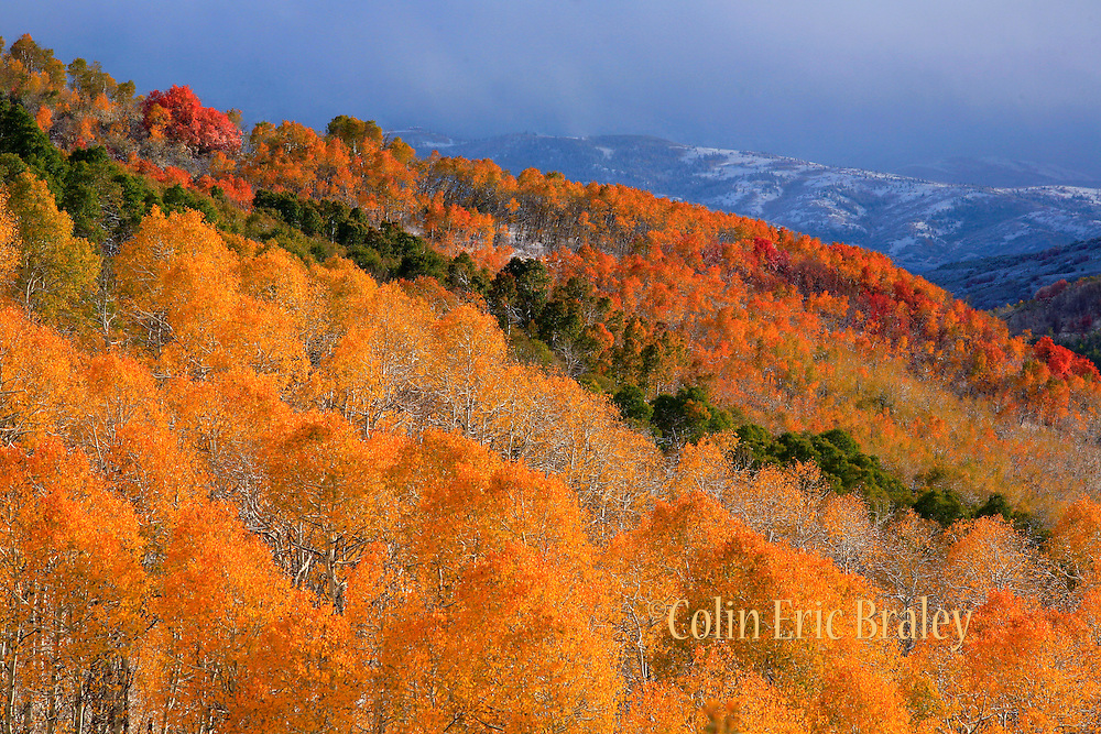 A light dusting of snow blankets the area as the vibrant autumn leaves and other foliage can be seen along the Wasatch Mountains in northern Utah.