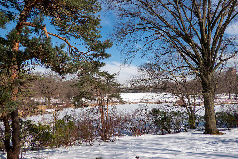 A still frozen Turtle Pond and a Great White Lawn slowly thawing; Central Park, Feb. 24, 2021.