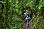 Touristen auf einer Wanderung, Nyungwe Forest National Park, Ruanda<br /> <br /> Tourists on a hike, Nyungwe Forest National Park, Rwanda