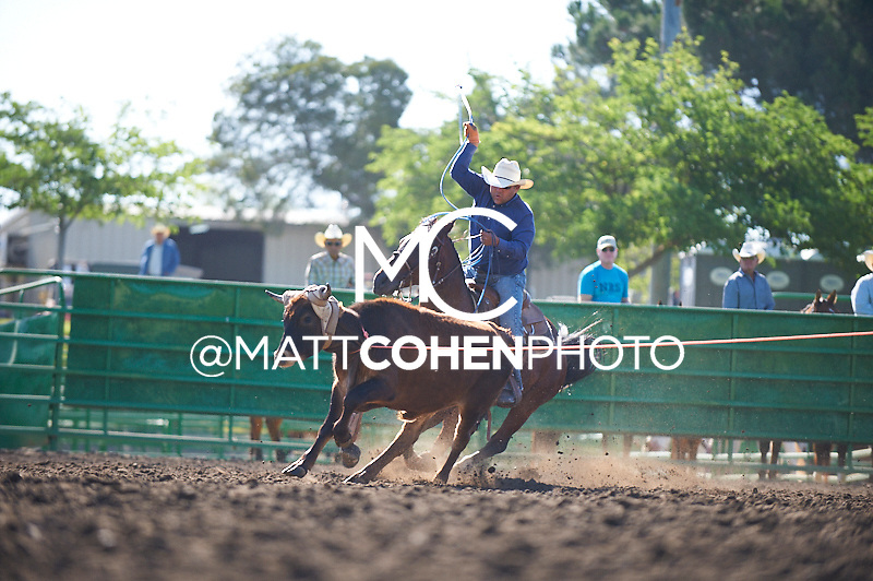 Team roper Joseph Shawnego of Oakdale, CA competes at the Livermore Rodeo in Livermore, CA<br /> <br /> <br /> UNEDITED LOW-RES PREVIEW<br /> <br /> <br /> File shown may be an unedited low resolution version used as a proof only. All prints are 100% guaranteed for quality. Sizes 8x10+ come with a version for personal social media. I am currently not selling downloads for commercial/brand use.