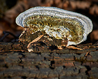 Fungi on a Log at the Sourland Mountain Preserve. Winter Nature in New Jersey. Image taken with a Nikon D3x camera and 80-400 mm VR lens.