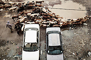 Un gregge tra le auto e le pozzanghere create dal dissesto stradale nell'area di Casanchis, Addis Ababa 8 settembre 2014.  Christian Mantuano / OneShot <br /> <br /> A flock among the cars and the puddles due to the uneven and rough roads in the Casachis area, Addis Ababa September 8, 2014