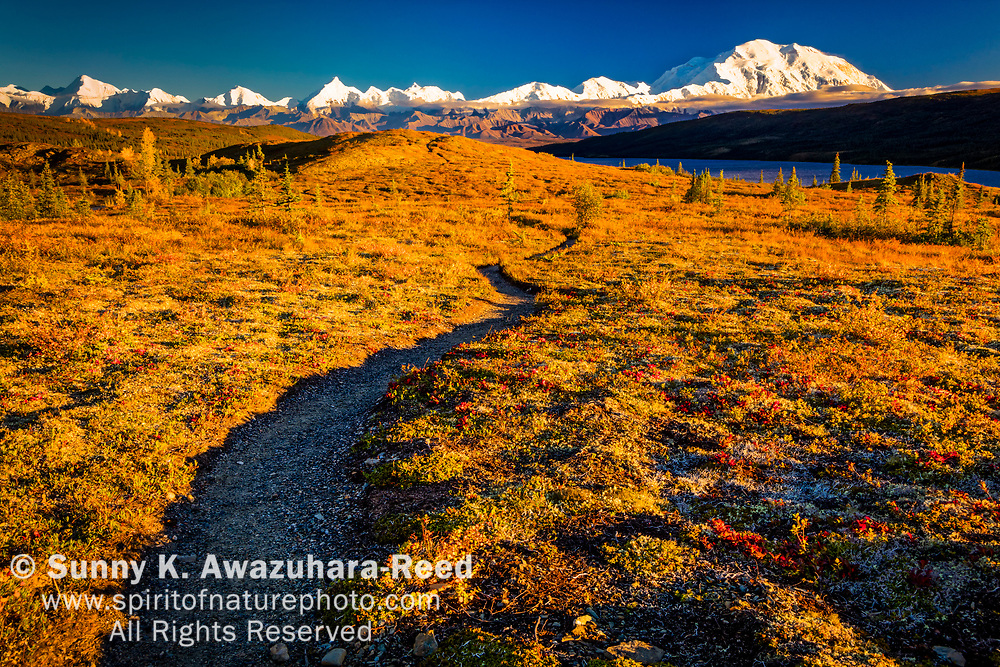 Trail through fall color tundta leading to Mt. Denali (McKinley) and Wonder Lake, Denali National Park & Preserve, Interior Alaska, Autumn.