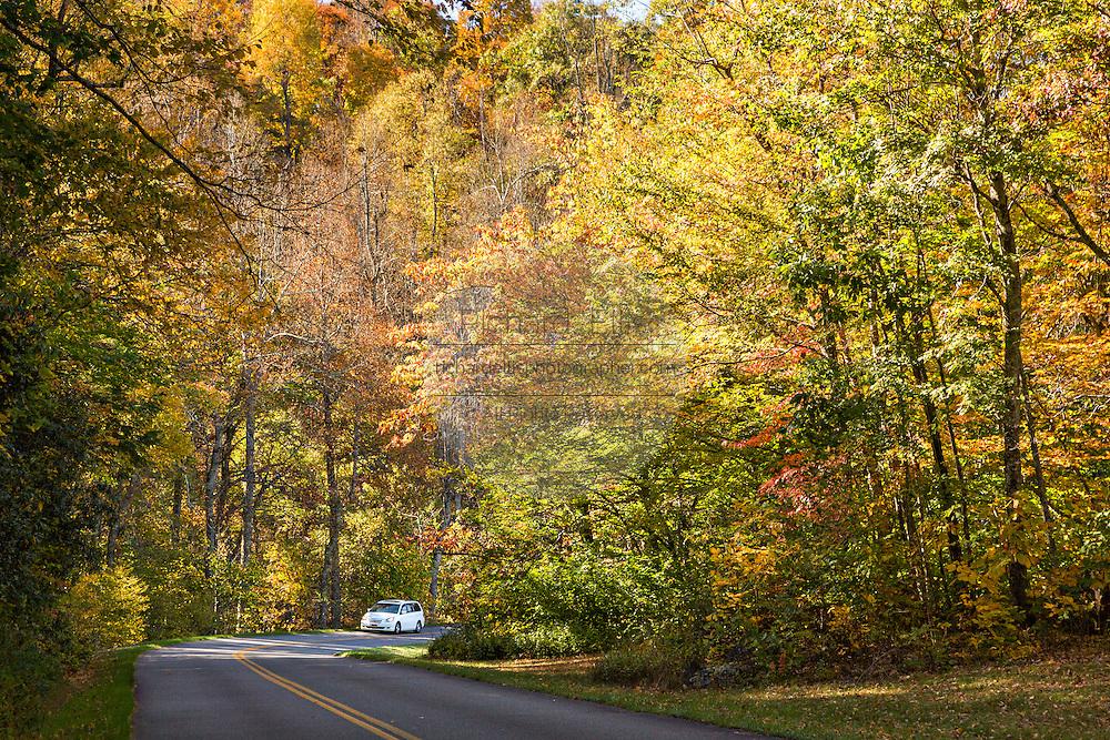 Autumn foliage along the Blue Ridge National Parkway outside Asheville, North Carolina.