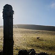 The sun breaks over the hills in the Scottish Borders. A spider's web sits in the sun of a fence post and an ewe with lambs rest in the field. The Southern parts of Scotland, the Borders, are mostly rolling hills and farm land.