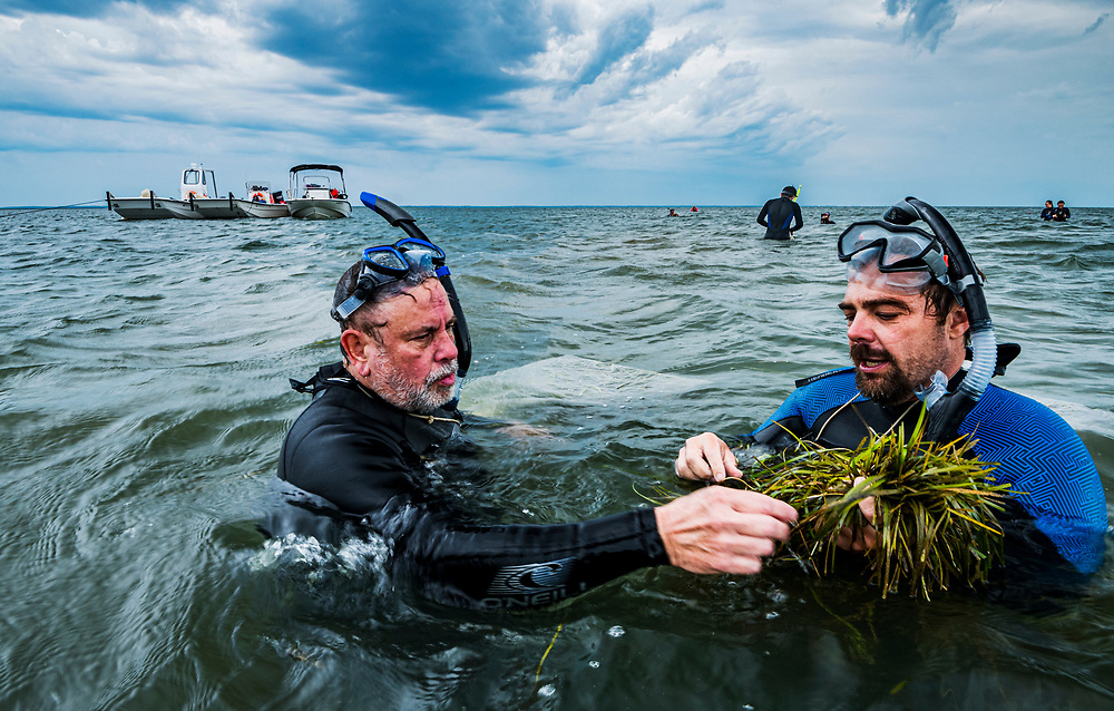 Scientist Bo Lusk with The Nature Conservancy teaches a volunteer what to look for while collecting eelgrass (Zostera marina) seeds for a seagrass restoration project off Virginia, USA.