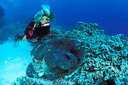 diver with giant clam,<br /> Tridacna gigas, MR 269<br /> Great Barrier Reef, Australia,<br /> ( Western Pacific Ocean )