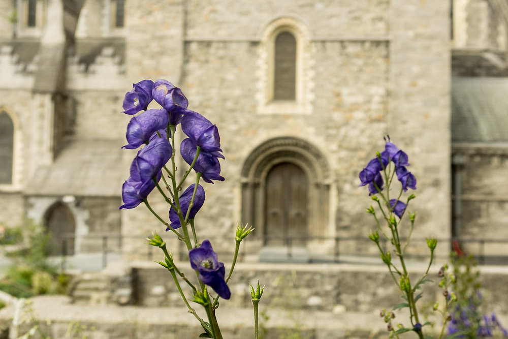 Flowers in front of Christ Church Cathedral, Dublin, Ireland.