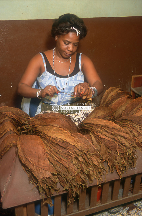 Woman working with tobacco leaves in the Partagas cigar factory in Havana; Cuba,