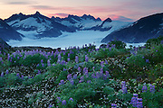Wildflowers on Mount Stroller White above the Mendenhall Glacier, Tongass National Forest, Alaska