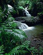 Hawaii Tropical Gardens, Kauai, Hawaii, USA<br />