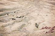Antelope Island State Park,Utah