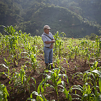 Cristobal Coc, indigenous Q'eqchi farmer and part of a World Renew programme in Guatemala, stands in a corn field in Concepción Actelá, Alta Verapaz. Drought linked to climate change has severely affected the crops in this area over the last seven years.