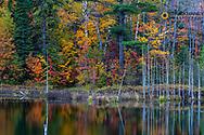Autumn color reflects in pond near Marquette, Michigan, USA