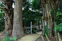 """Joruriji is temple No. 46 on theShikoku Pilgrimage.  It stands among fields on a gentle slope in the south of Matsuyama.  The temple building is largely hidden from view by the tall trees that surround it. These ancient junipers are thought to be about 1,000 years old.  The grounds are composed of a beautiful, well-tended garden. Next to the main hall is a wisteria bower next to lotus ponds. The temple is believed to have a lot of divine favors, so it is also referred to as """"Handyman of divine favors""""Emon Saburo came from this area, and a stone monument is engraved with a haiku written by Masaoka Shiki."""