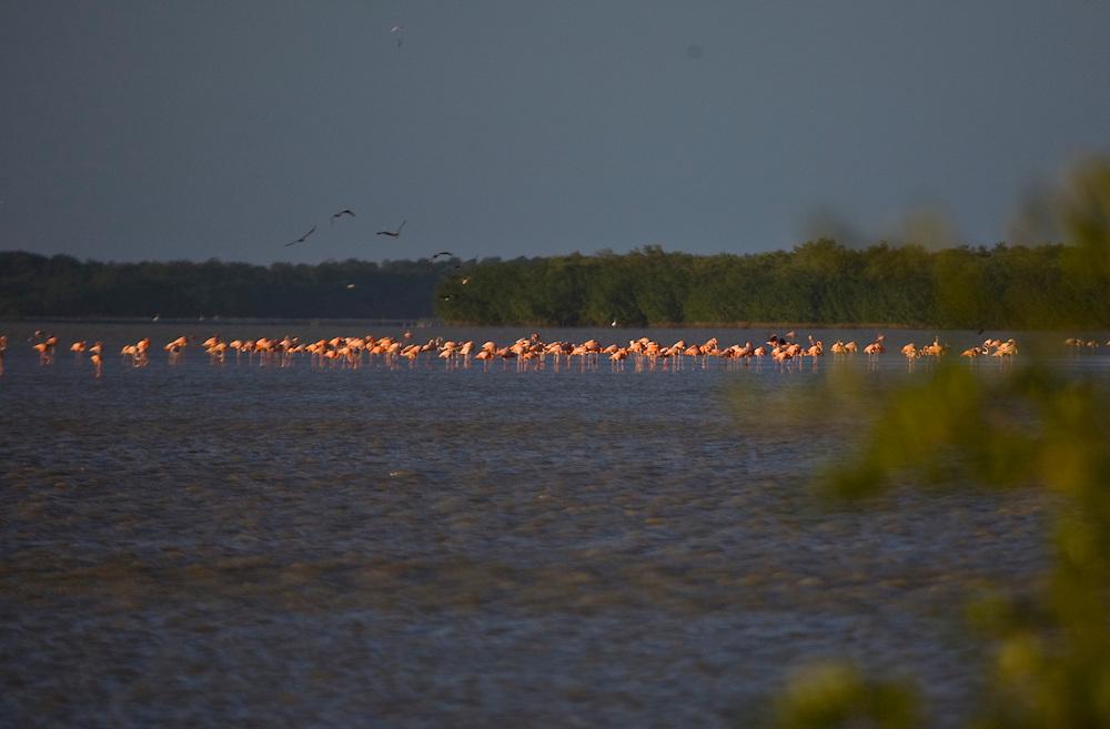 Coro_VEN, Venezuela...Parque Nacional dos Medanos de Coro no Estado Falcon, Venezuela. Na foto um bando de Flamingos Andinos  (Phoenicopterus andinus)...Medanos de Coro National Park in Coro State, Venezuela. In the photo a group of Andean Flamingos  (Phoenicopterus andinus)...Foto: JOAO MARCOS ROSA / NITRO