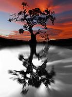 Abstract Photo Art