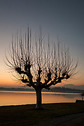 Groppello. Lombardia. ITALY. General Views, across Lake/Lago Varese. after sunset. Silhouette of a tree. Skeleton with out leaves. Italy<br />  <br /> Friday  30/12/2016<br /> <br /> © Peter SPURRIER,<br /> <br /> <br /> LEICA CAMERA AG - LEICA Q (Typ 116) - 1/400 - f1.7