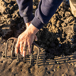 A man digs for clams in a mudflat in Brunswick, Maine.