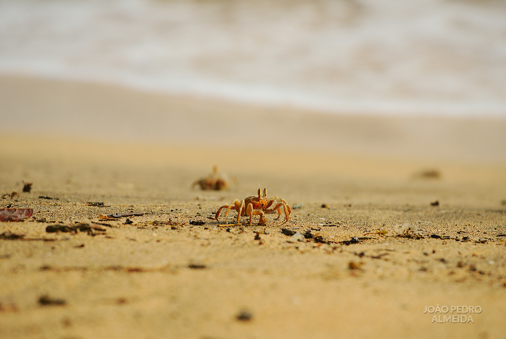 Crabs getting out of their burroughs in low tide.