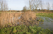 Overflowing drainage ditch flooding onto field in the River Deben valley, Loudham, Suffolk, England - December 2012