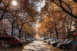 Autumn colours on Kollwitzstrasse in Prenzlauer Berg, Berlin Germany