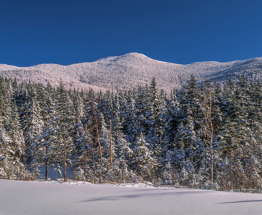 Snow covered trees & Old Speck Mountain, spruce forest in winter, Grafton Township, ME