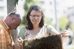 Beekeepers looking at honeycomb, Freiburg im Breisgau, Baden-Wuerttemberg, Germany