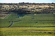 Frankrijk, Beaunne, 20-9-2008Druiventrossen hangt te rijpen in de zon. De Bourgogne is een belangrijk wijngebied.Bunch of grapes hanging to ripen in the sun. Burgundy is an important wine region.Foto: Flip Franssen/Hollandse Hoogte