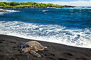 Wildlife - Sea Turtle