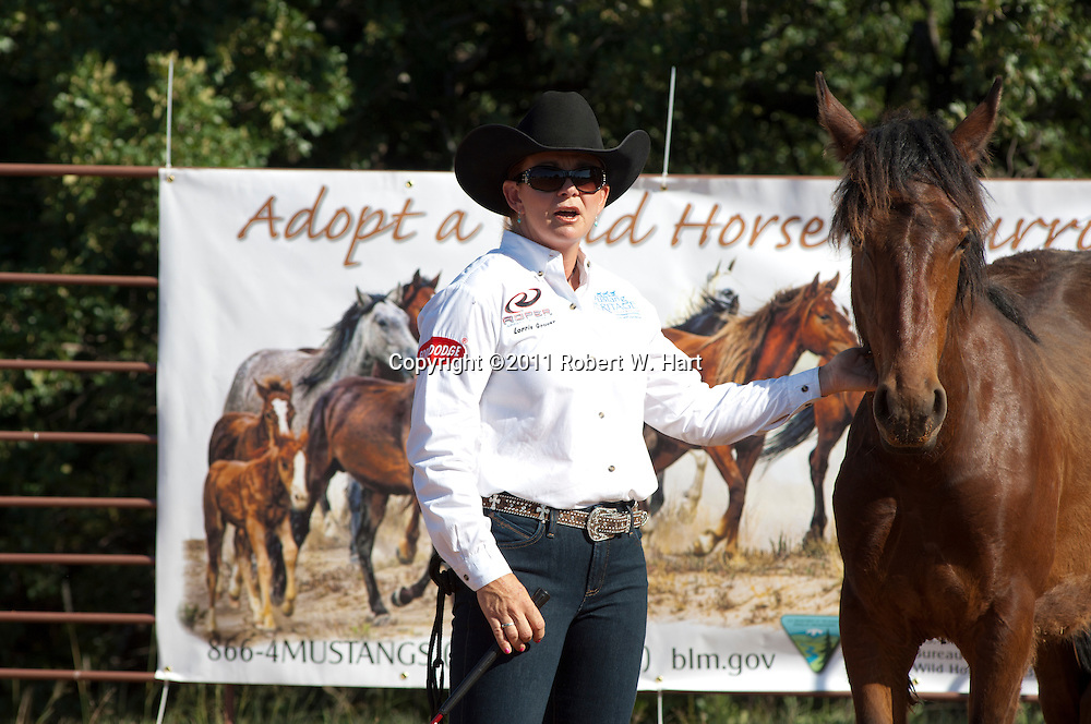 Trainer Lorrie Grover touches a wild mustang that she started working with only 20 minutes earlier at a wild horse and Burro auction run by the Bureau of Land Management Saturday May, 4, 2011 at All Star Equestrian Arena  in Bureleson, Texas. The horse is a yearling filly captured in Oregon...Robert W. Hart/Special Contributor