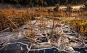 Ice patterns in marsh, winter dawn, West Coast, New Zealand