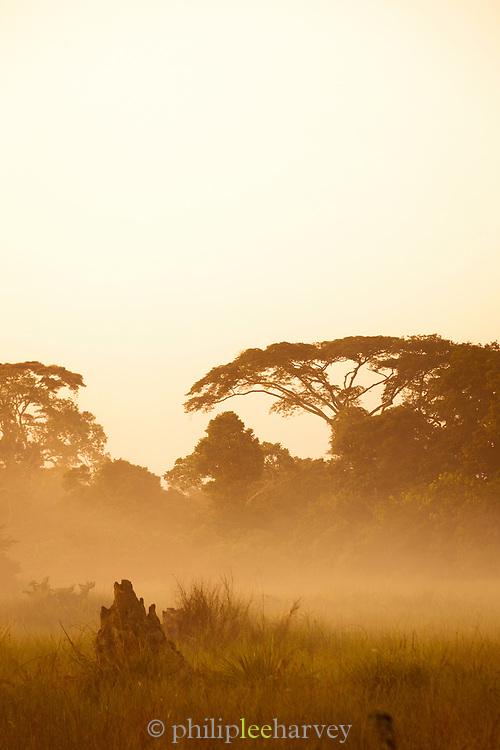 Sunrise, treeline landscape, Lekoli River,