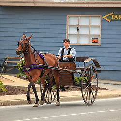 Intercourse, PA, USA - June 17, 2012: A young Amich man steers a single-axle horse-drawn buggy in Intercourse, PA.