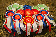 Dairy, beef and store cattle competition winners rosettes. 'Pateley Show', as the Nidderdale Show is affectionately known, is a traditional Dales agricultural show for the finest livestock, produce and crafts in the Yorkshire Dales. Held in the picturesque surrounds of Bewerley Park, Pateley Bridge, is one of the county's foremost shows. It regularly attracts crowds of 17,000 and traditionally marks the end of the agricultural show season.
