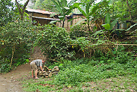 Herpetologist Hinrich Kaiser searches for lizards in a rock pile in front of a house made of bamboo and corrugated tin, in the mountains southwest of Dili, Timor-Leste (East Timor)