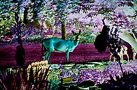 The Alien Deer Want My Yucca Flowers. I may have to stay up all night.