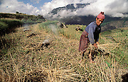 Villagers farm terraced land on the hillsides near their homes, growing wheat, rice, chilies, and potatoes, depending on the season. The wheat harvest, now ending, is assigned to the women. But the men do other jobs. A neighbor gathers the chaff to burn it while Nalim and Namgay's son-in-law Sangay Khandu plows the fields below with bulls. Shingkhey Village, Bhutan. From Peter Menzel's Material World: A Global Family Portrait.