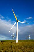 Wind turbines at the Hawi Wind Farm, Upolu Point, Hawi, The Big Island, Hawaii USA