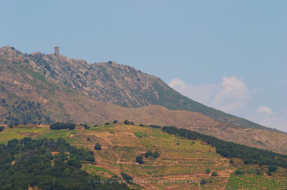 Vineyard. Madeloc hilltop tower. Banyuls sur Mer, Roussillon, France